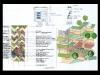 dwightmacdonaldasla-landscape-design16