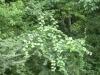 Cat Greenbriar