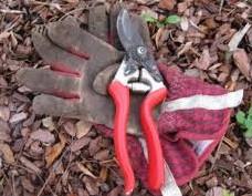 gardening-maintenance