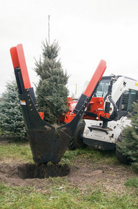machine-dug-trees