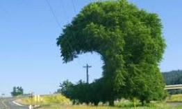 power-lines-tree