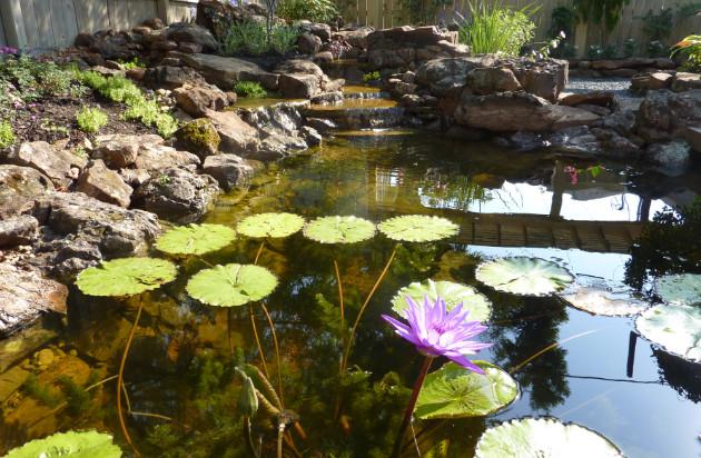 unique houston landscaping designs nature s realm